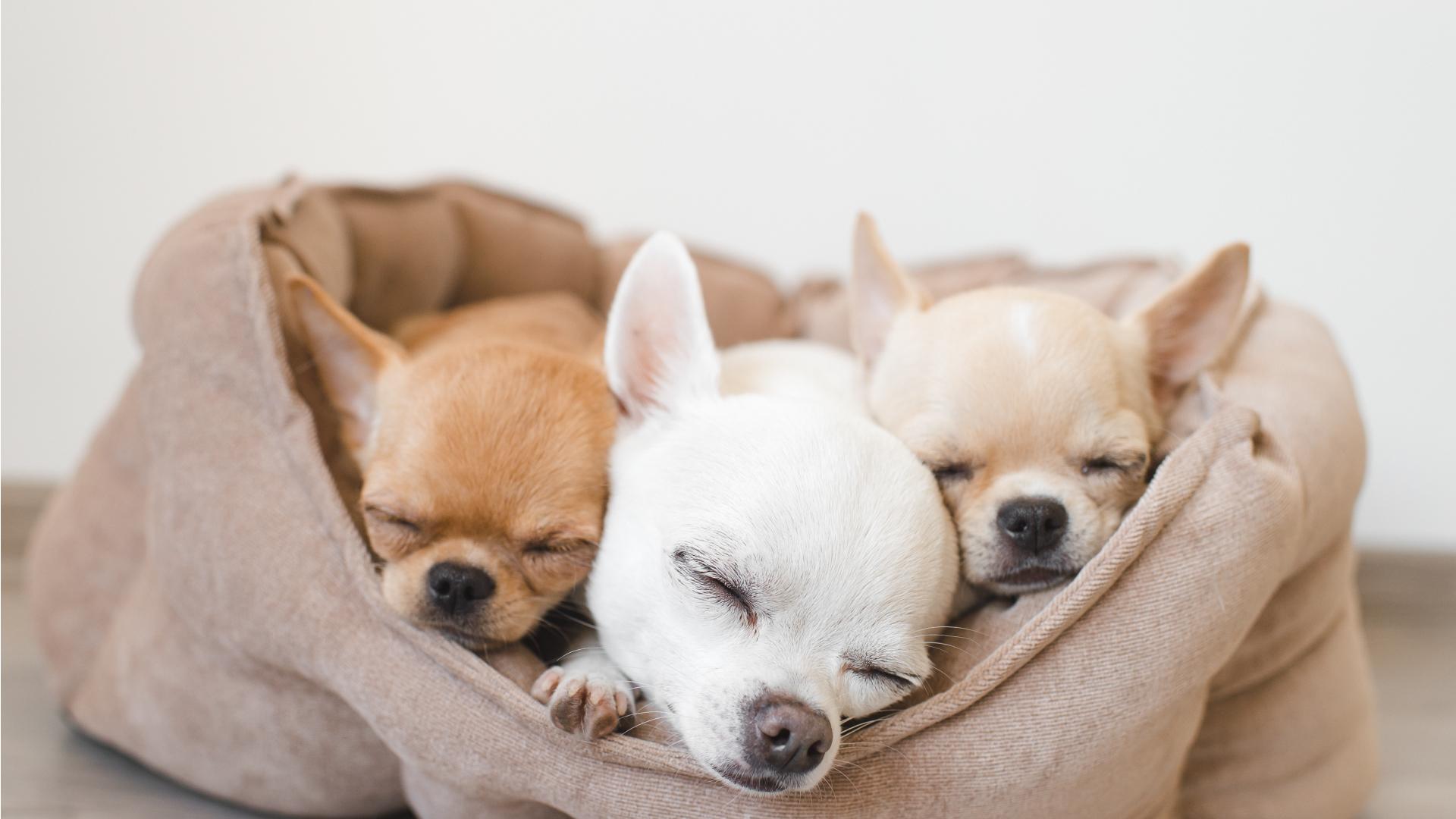 criador-canino-fuente-blanca